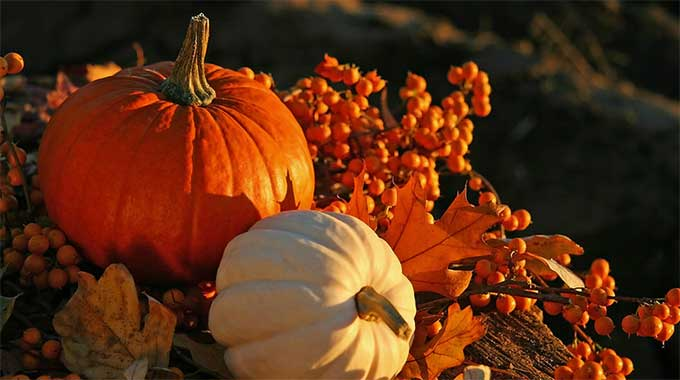 Seasonal pumpkins in the fall