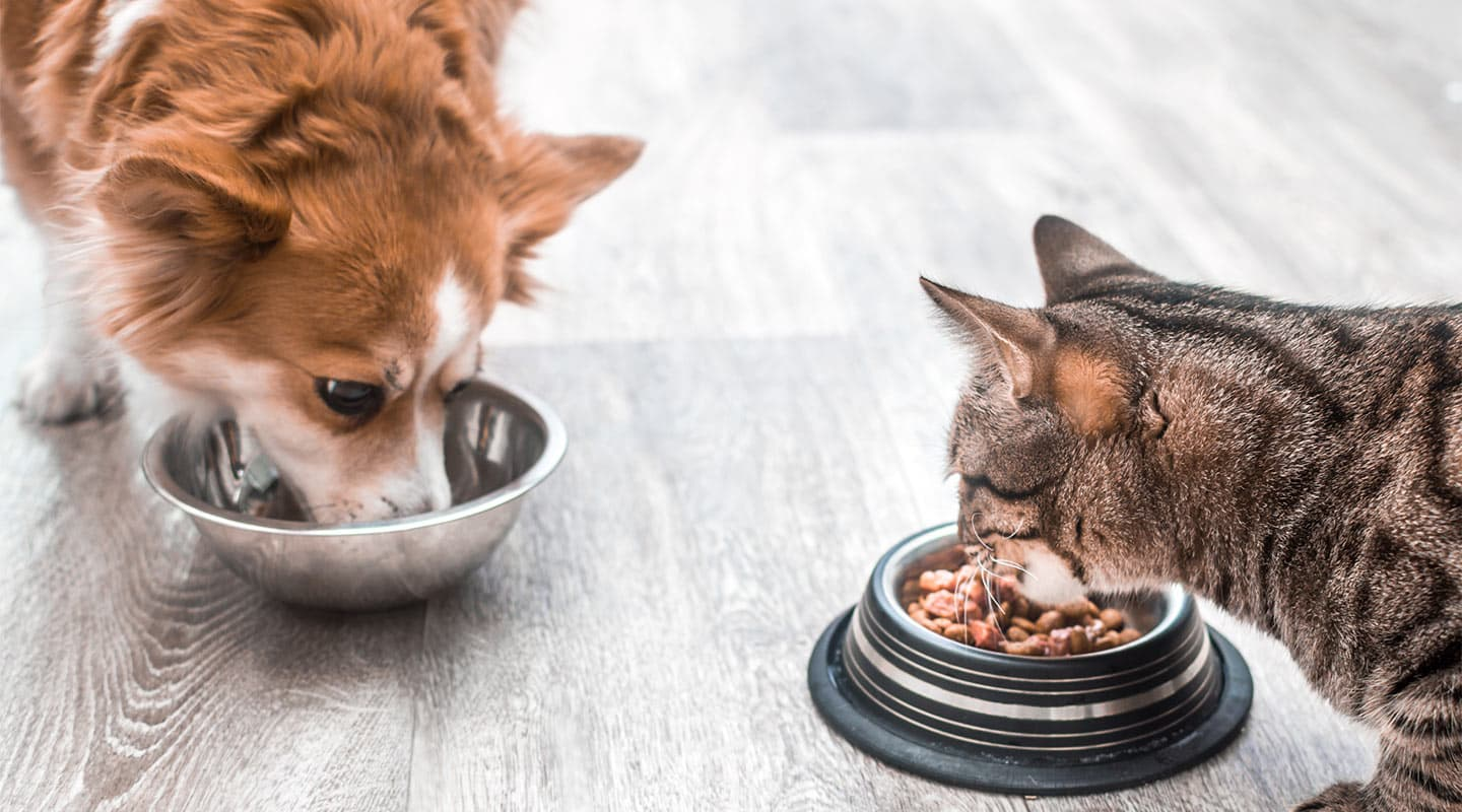 Dog and Cat eating out of pet bowls
