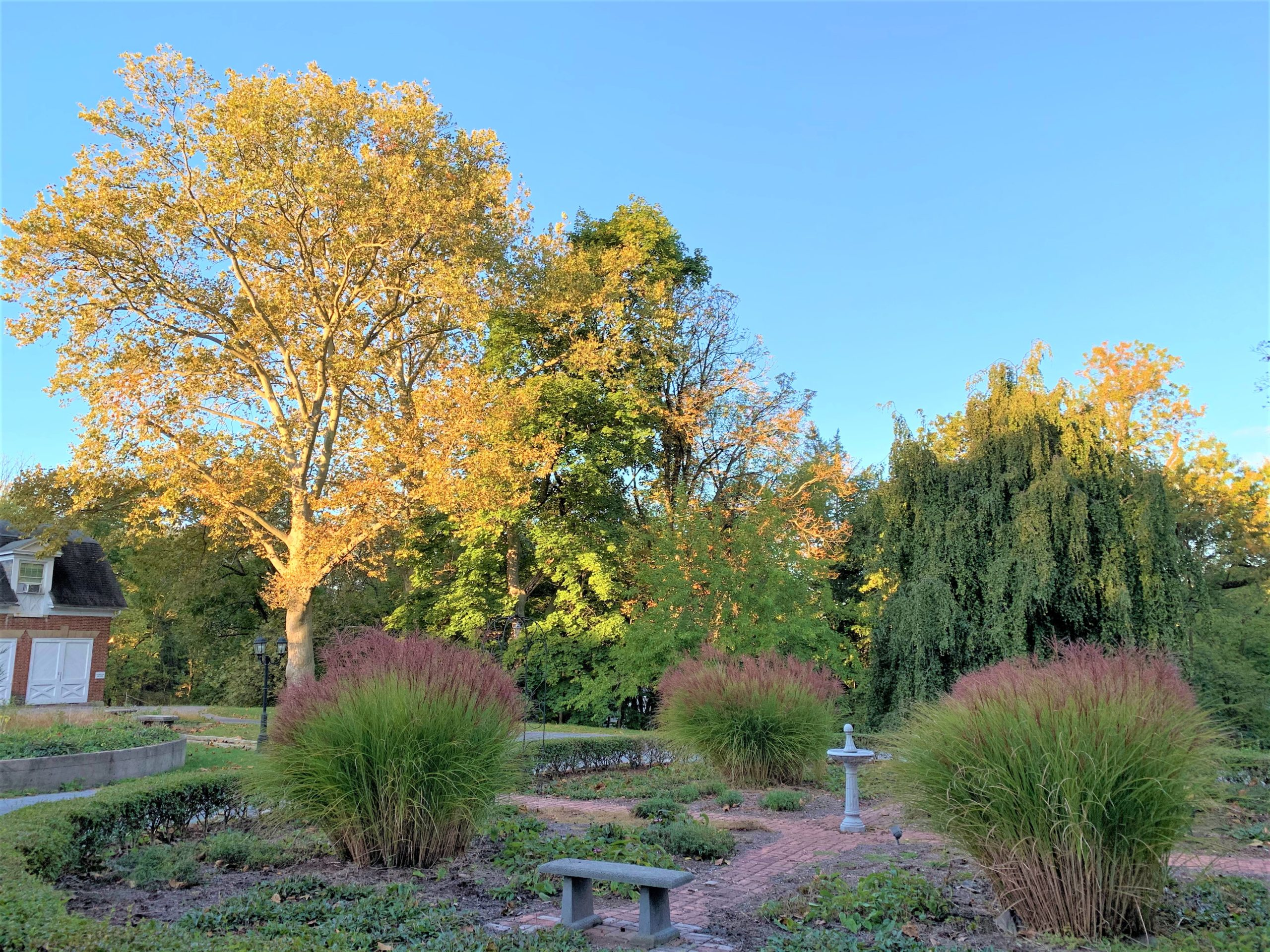 Fall Foliage in the garden area