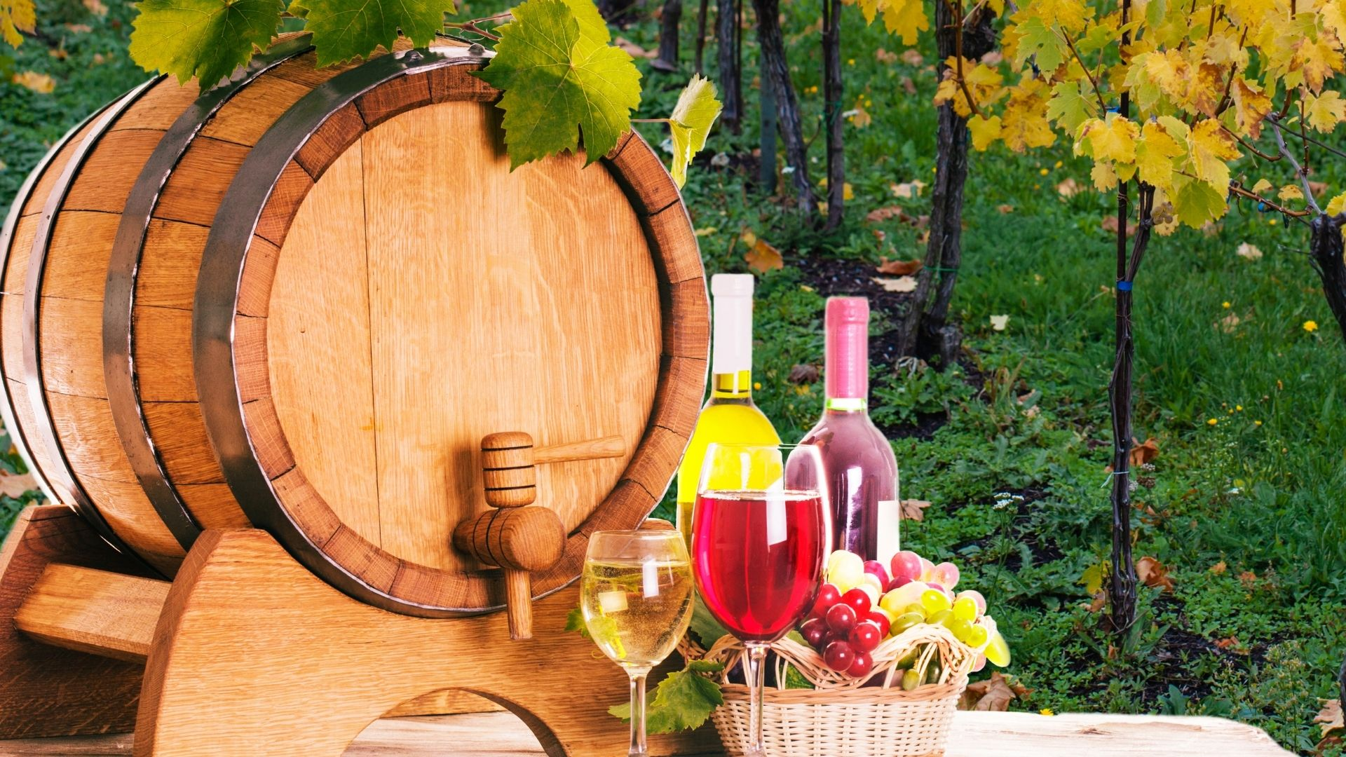 Wine glasses, wine bottles, fruit and barrel at a winery